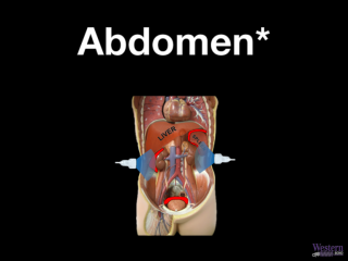 Abdomen - (chapters with * should be reviewed for rotation)