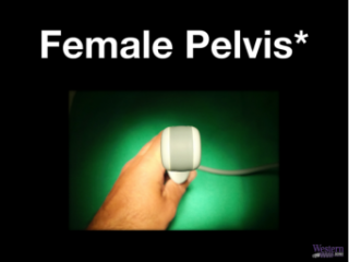 Female Pelvis (chapters with * should be reviewed for rotation)
